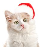 Kleine Katze mit Sanas Hut Stockfotos