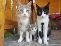kleine Katze, Mutter, Schwester, Landschaft, Katzenalbum der schönen, großen Katze, schwarze Katze, Garten, Terrasse, schöne Land stockbild