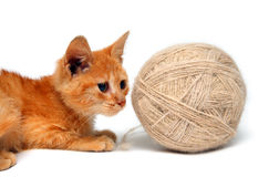 Kleine Katze und große Schlaufe der Wollen Lizenzfreie Stockbilder