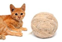 Kleine Katze und große Schlaufe der Wollen Stockfotografie