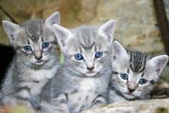 Kleine Katzen Stockbild