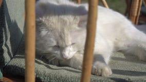 Kleine Katzenwäschen auf einem Stuhl stock footage