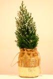 Kleine Kerstboom in de sneeuw Royalty-vrije Stock Foto