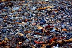 kleine Kiesel und Meerespflanze auf der Küste lizenzfreie stockbilder