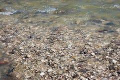 Kleine kiezelstenen in een schone bergrivier Royalty-vrije Stock Afbeelding