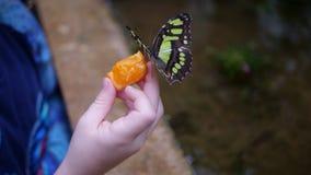 Kleine Kinder mit Schmetterling auf der Hand Lizenzfreie Stockfotos