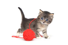 Kleine Kitten Playing With Red Ball des Garns Lizenzfreie Stockbilder