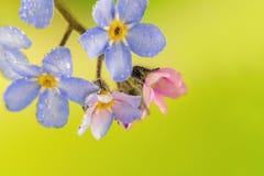 Kleine kleurrijke bloemen met waterdruppeltjes Stock Foto's