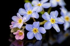 Kleine kleurrijke bloemen met waterdruppeltjes Royalty-vrije Stock Foto's