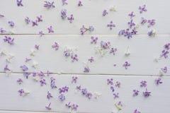 Kleine Knospen der Flieder auf weiß-gemalten hölzernen Brettern Stockbild