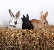 Kleine konijnen Stock Foto's