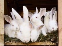 Kleine konijnen met hun mum Stock Fotografie