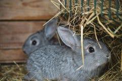 Kleine konijntjes bij ons familielandbouwbedrijf royalty-vrije stock afbeeldingen