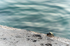 Kleine krab Royalty-vrije Stock Afbeelding