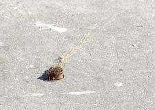 Kleine krab Stock Afbeeldingen