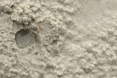 Kleine Krab op Zandig Strand Royalty-vrije Stock Fotografie