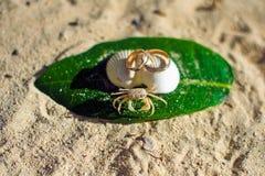 Kleine Krabbe und Verlobungsringe auf dem Strand stockfotografie