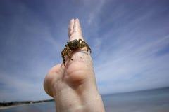 Kleine Krabbe von Sardinien Stockfotos