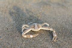 kleine krabben op het overzees stock fotografie