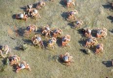 Kleine krabben op zandstrand van de oceaan Stock Afbeeldingen