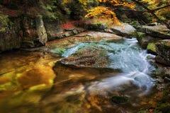 Kleine Kreek in Autumn Mountain Forest Stock Foto's
