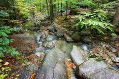 Kleine kreek in de herfstbos Stock Fotografie