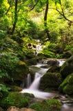 Kleine kreek in een bemost bos stock afbeeldingen