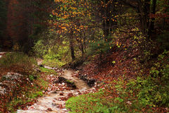 Kleine kreek in het bos tijdens de herfst Royalty-vrije Stock Afbeeldingen
