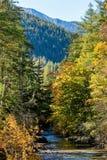 Kleine kreek in Hoge Tatras-bergen in de herfst, Slowakije Stock Fotografie