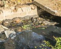 Kleine krokodillen stock foto's
