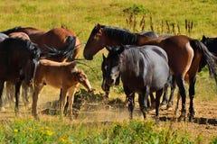 Kleine kudde van wild paarden Royalty-vrije Stock Foto