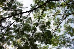 Kleine Laubbäume auf dem Sonnenlicht Stockfotos