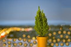 Kleine levende Kerstboom in een pot op bokehachtergrond bokeh sneeuwvlok stock foto's