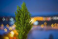 Kleine levende Kerstboom in een pot op bokehachtergrond bokeh sneeuwvlok stock afbeeldingen