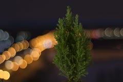 Kleine levende Kerstboom in een pot op de achtergrond van bokeh royalty-vrije stock fotografie