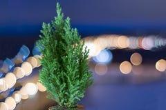 Kleine levende Kerstboom in een pot op de achtergrond van bokeh royalty-vrije stock foto
