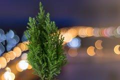 Kleine levende Kerstboom in een pot op de achtergrond van bokeh stock foto