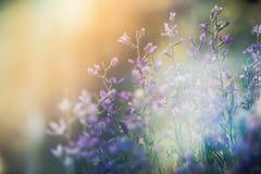 Kleine lila Blumen Lizenzfreie Stockfotos