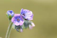 Kleine lilac bloem Stock Fotografie