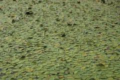 Kleine Lilien lizenzfreie stockfotografie