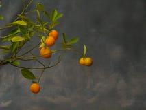 Kleine mandarijnen Stock Afbeelding