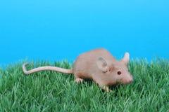 Kleine Maus Lizenzfreie Stockfotografie