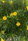 Kleine medebloemen op close-upspruit in koseiland Stock Foto