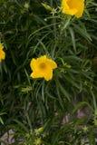 Kleine medebloemen op close-upspruit in koseiland Royalty-vrije Stock Foto's