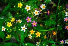 Kleine mehrfarbige Wiesenblumen stockbild