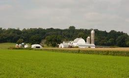 Kleine midwesten melkveehouderij Stock Afbeeldingen