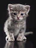 Kleine Miezekatze Stockfoto