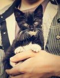 Kleine Miezekatze in den Händen Stockfotografie