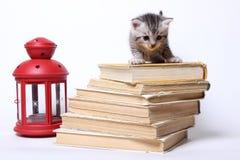 Kleine Miezekatze, die auf einem Stapel Büchern sitzt Stockbild