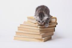 Kleine Miezekatze, die auf einem Stapel Büchern sitzt Stockbilder